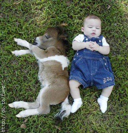 ロバと赤ちゃん